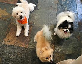 dog boarding accommodations